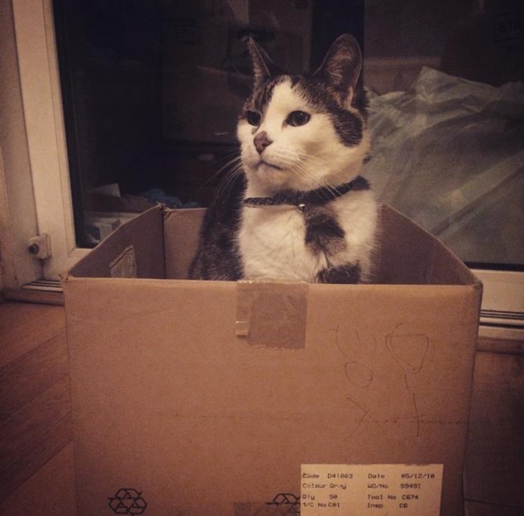 Bec - Cat